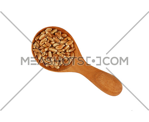 Wheat grain in wooden scoop isolated on white background, close up, elevated top view, directly above