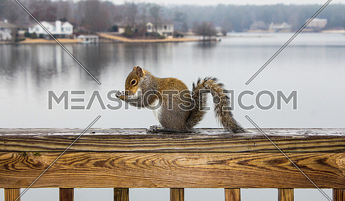 A squirrel on top of a balcony's  wooden rail by the lake eating bread
