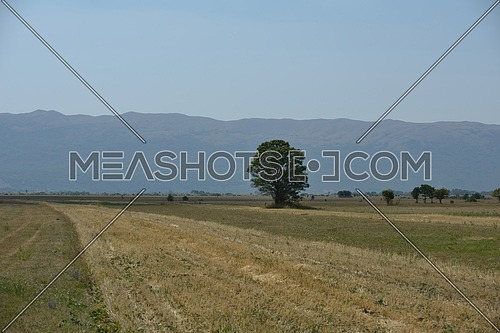 lonely tree on meadow at beautiful nature cuntryside landscape