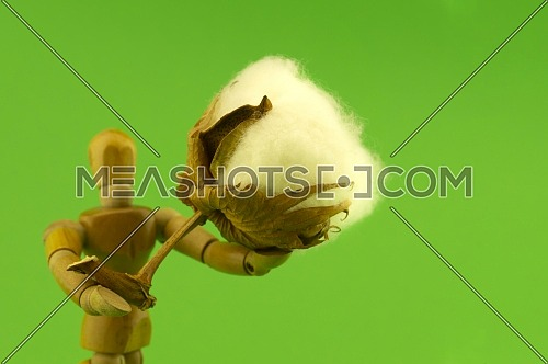 Wooden puppet or figure holding a raw cotton boll over a green background in a natural fiber or ecology conceptual image