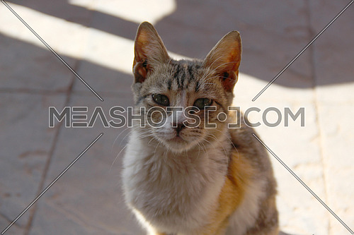 a close up for a street cat in Cairo, Egypt