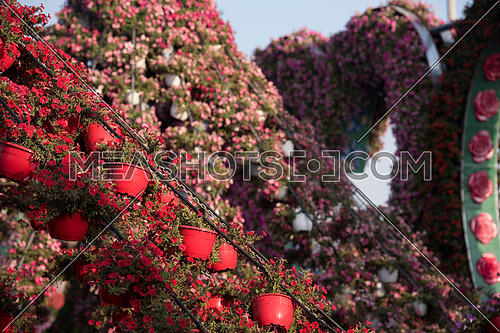 30 January 2017 Dubai miracle garden with over 45 million flowers in a sunny day