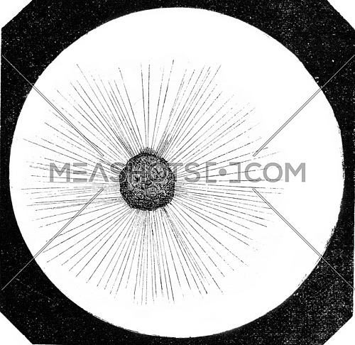 Actinophrys sun, Actinophrys ground, magnified 250 times, vintage engraved illustration. Magasin Pittoresque 1873.