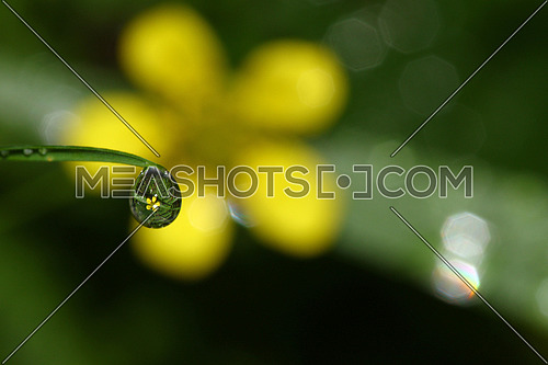 Water droplet reflecting a yellow flower and grass