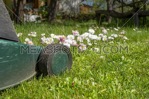 Seasons and yard maintenance concept with electric lawn mower and dainty white and pink spring flowers in a green garden lawn