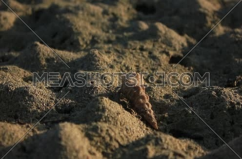 Big Close Shot for a Shellfish (Clibanarius) moving in the sand at wadi Lahmi at Day - 5D`