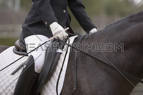 Detail of saddle and leads a Spanish purebred horse, Spain