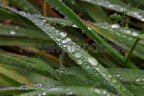 Close up raindrops, water droplets or dew drops on green grass