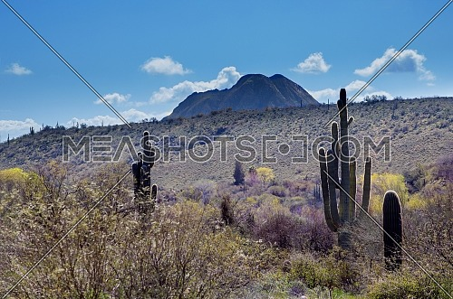 The diversity of the Arizona desert landscape with Saguaro Cactus and Tucson Mountains