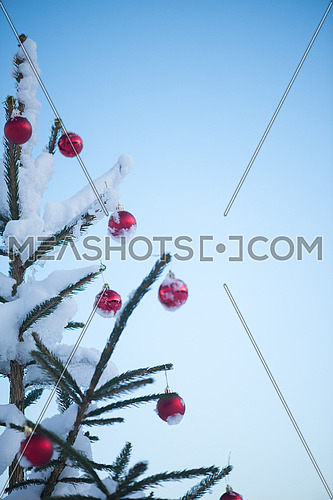 christmas red balls  on pine tree covered with fresh snow