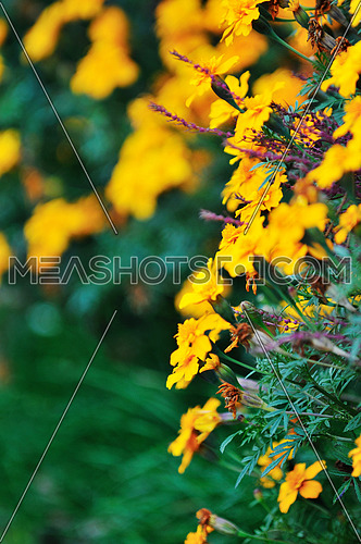 flower background in many colors outdoor in nature