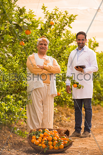 portrait of an elderly middle eastern farmers and young man on a farm tangerine with a smile on their faces