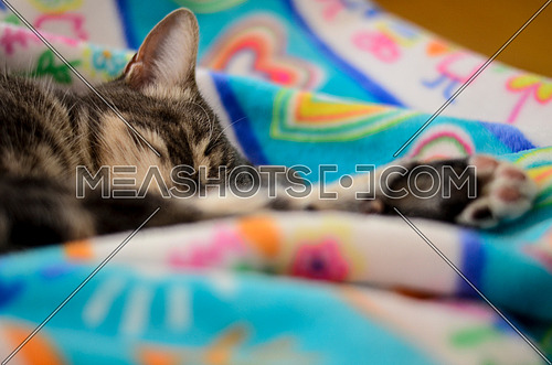 A cat sleeping on a blanket