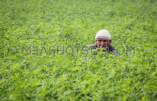 A Farmer in his field in Egypt