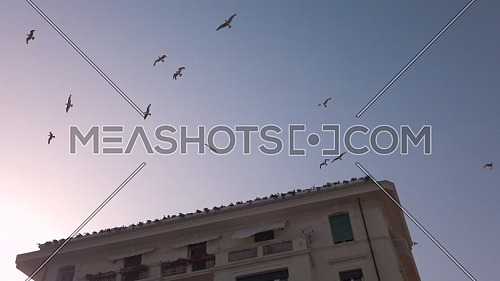 Flight of birds in the sky of the city of Varazze at sunset