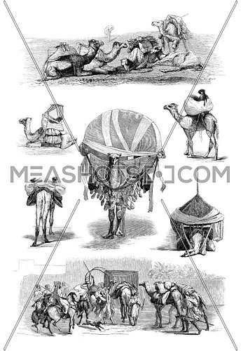 Drawings of Valentin, vintage engraved illustration. Magasin Pittoresque 1861.