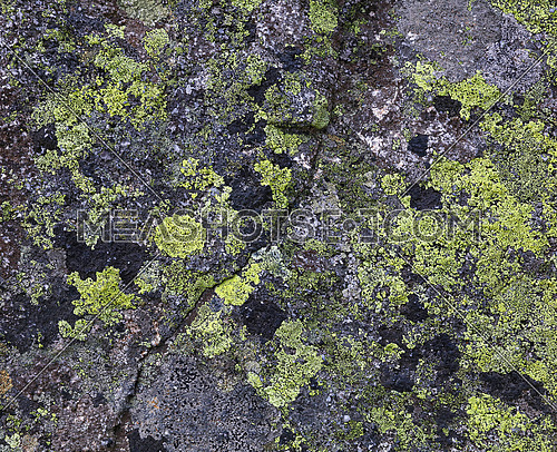 Close up background pattern of green and black lichen and moss stains on grey stone rock surface