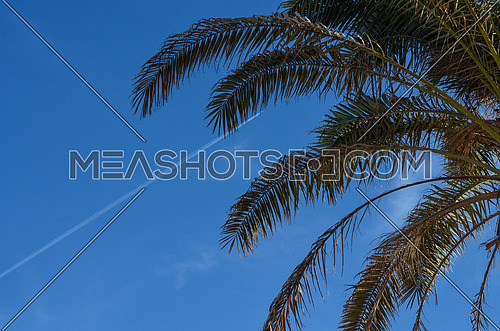 The top of palm trees and blue sky appears on the background