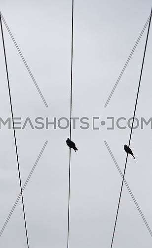 two doves standing on an electricity cables