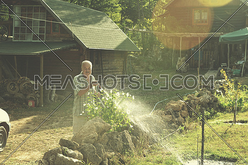 Senior gardener watering the plants using a rubber hose in sunset