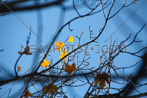 tree branch in autumn