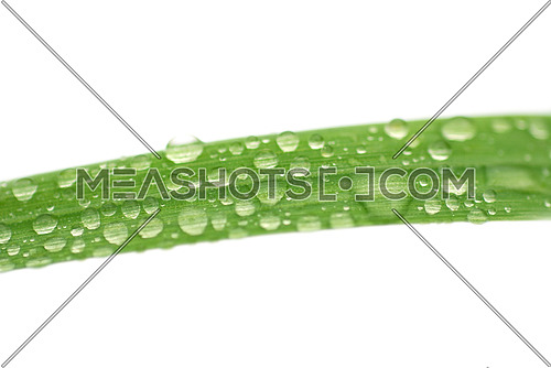 isolated grass with rain drops