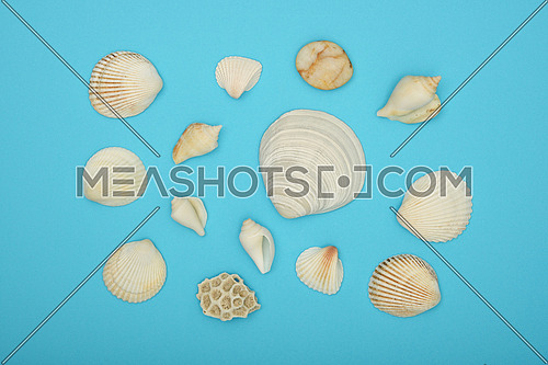 Close up group of assorted sea shells over blue paper background, elevated top view, directly above