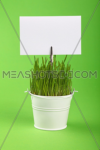 Fresh spring grass growing in small painted metal bucket with white paper sign copy space, close up over green paper background, low angle side view
