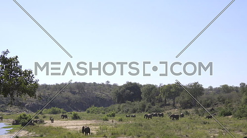 Wide scenic view of a large herd of elephants on a river bank