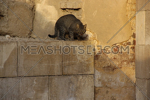a photo of a street cat in old Cairo , Egypt