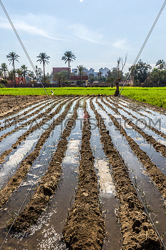 Farm watered