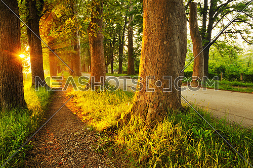 beautiful fresh morning with sun rays and dramatic light