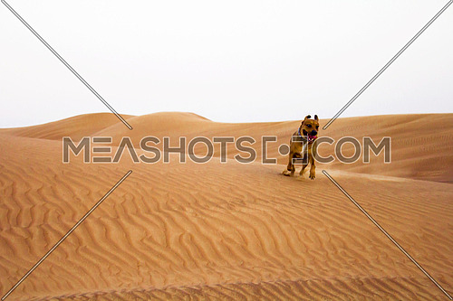 dog running in the desert