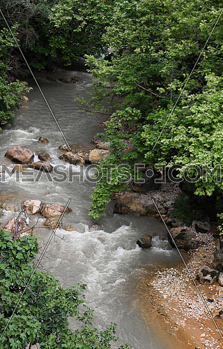a water stream in the forest