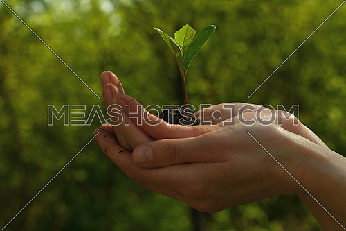 Close up woman hands hold one green spring plant sprout growing from heap of black humus soil over green natural background, side view