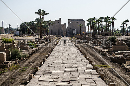 An old Luxor temple with a passage way leads to it decorated by small Sphinx on each side in Luxor city