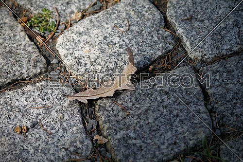 A dry leaf on stone ground