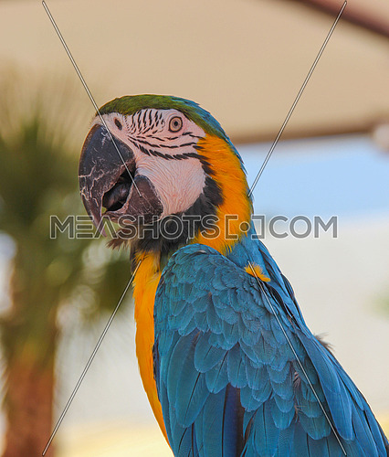 a closeup photo for a colourful parrot in Egypt