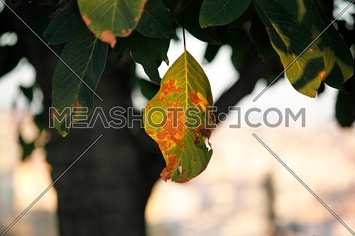brown leaf on a green tree