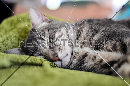 Sleepy cat taking a nap on a green blanket