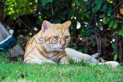 A cat with a scratched face in a garden outdoor