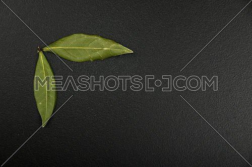 Group of two bay laurel leaves in corner of black chalkboard background with copy space