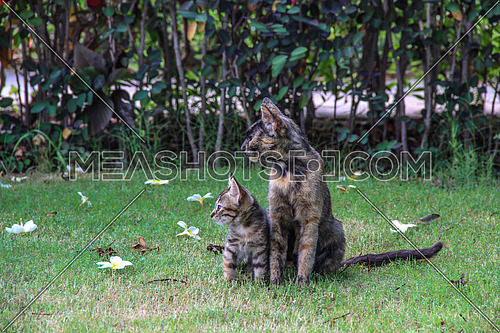 A cat and a kitten in a garden representing motherhood concept