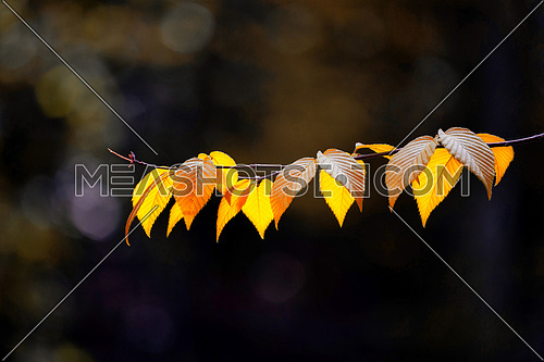 Yellow leaves in autumn background. Autumn background nature.