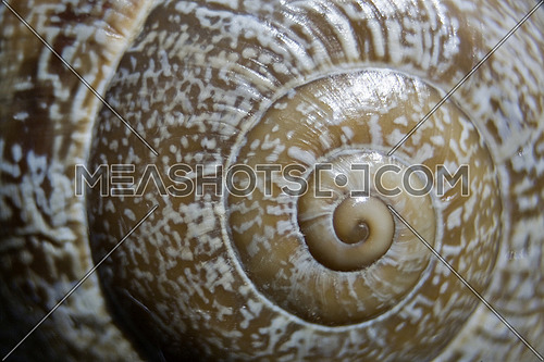 Shell of a snail, conceptual image, horizontal composition