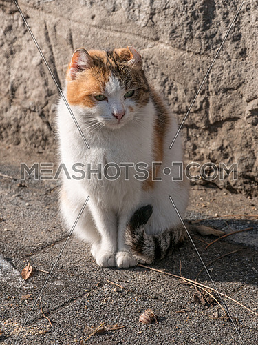 Portrait of beautiful ginger cat on asphalt. Red cat. Red-headed cat. Portrait of looking ginger cat.