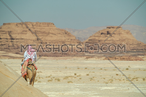 A bediuon male riding a camel at Wadi agarat area in Sinai at day.