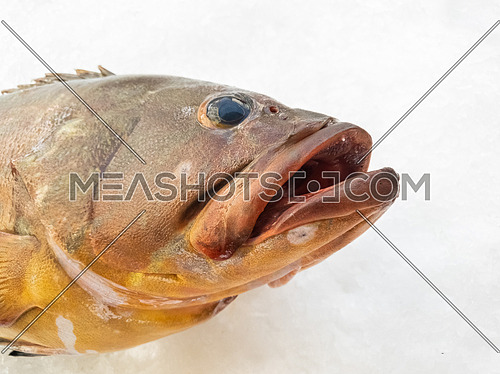 The Atlantic wreckfish, (Polyprion americanus), also known as the stone bass or bass groper in a fish market on ice,details close up.