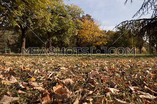 Autumnal Park With Golden Leaves and Trees. Fall Concept