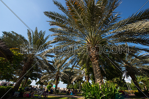 palm trees in a park with blue sky